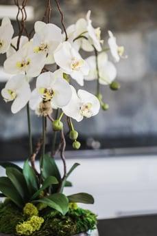 White orchid faux arrangement