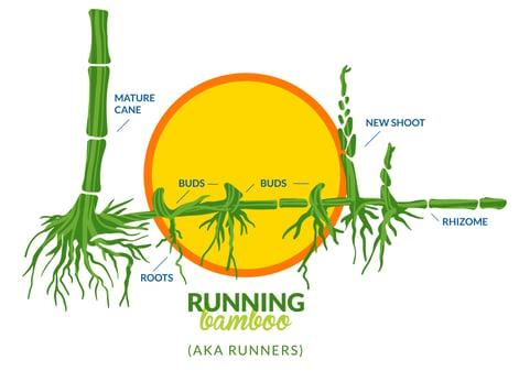 running_LI